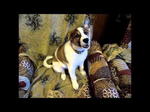 Рассказ бывалого щенка
