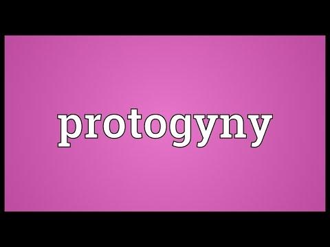 Header of protogyny