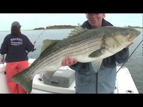 Striper fishing videos for Delaware river striper fishing