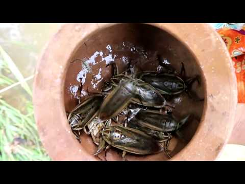 Survival skills: Finding insects in water fried on clay for food - Cooking insects eating delicious