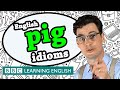 Pig Idioms - BBC Learning English (The Teacher)