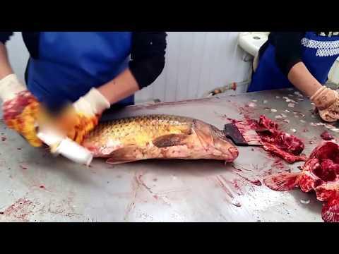 SUPER! Разделка рыбы сазана карпа по-атырауски (рынок Коктем) / Cutting Fillet Fish carp in Atyrau