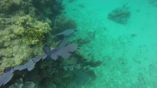 Colorful reef fish - Underwater Music Festival 2017