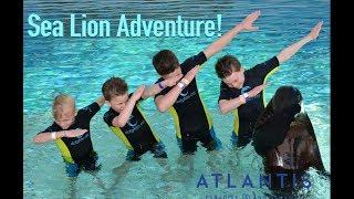 Brytons sea lion adventure! - Bryton Myler