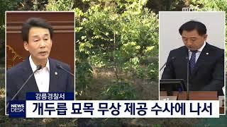 강릉시 시의원 묘목 무상 제공 경찰 수사