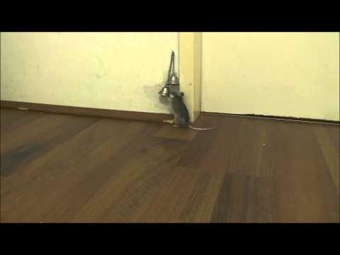 「ドアを開けてくださ~い♪」呼び鈴で訴えるネズミがカワイイ!