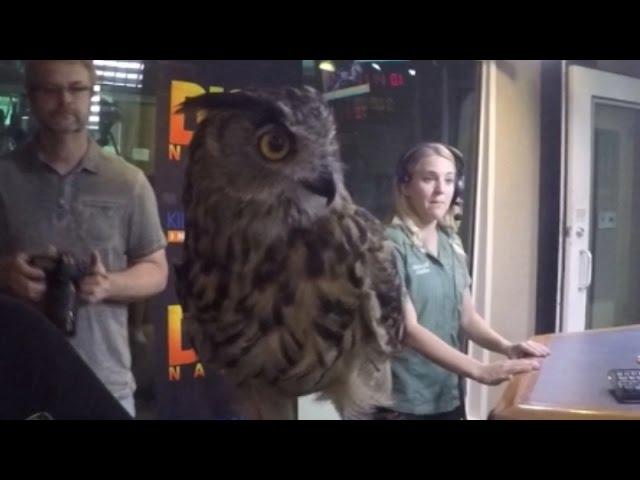 Stephanie Arne's Animals - Eagle Owl