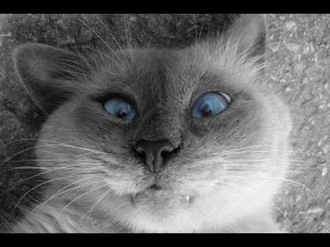 Приколы с котами, КОТЭ май 2014