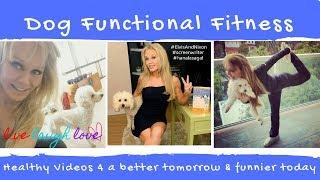 Celebrating 10 Years of Dog Functional