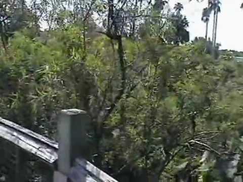 Gatorland – Orlando Florida – Natura e Animali (#1)