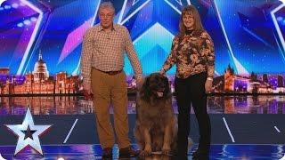 See huge dog Hagrid's sausage slinging World Record attempt | Britain's Got More Talent 2017