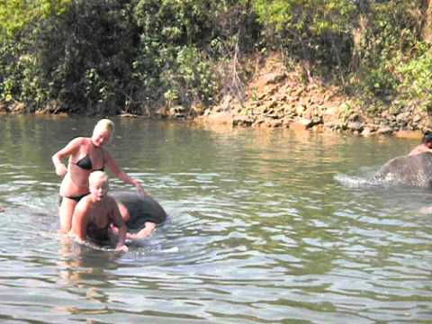 Swimming With Elephants Thailand Swimming With Elephants in Koh