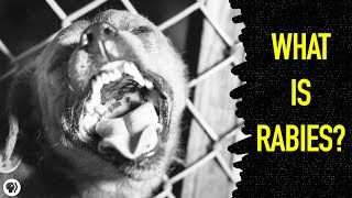 What Happens When You Get Rabies?