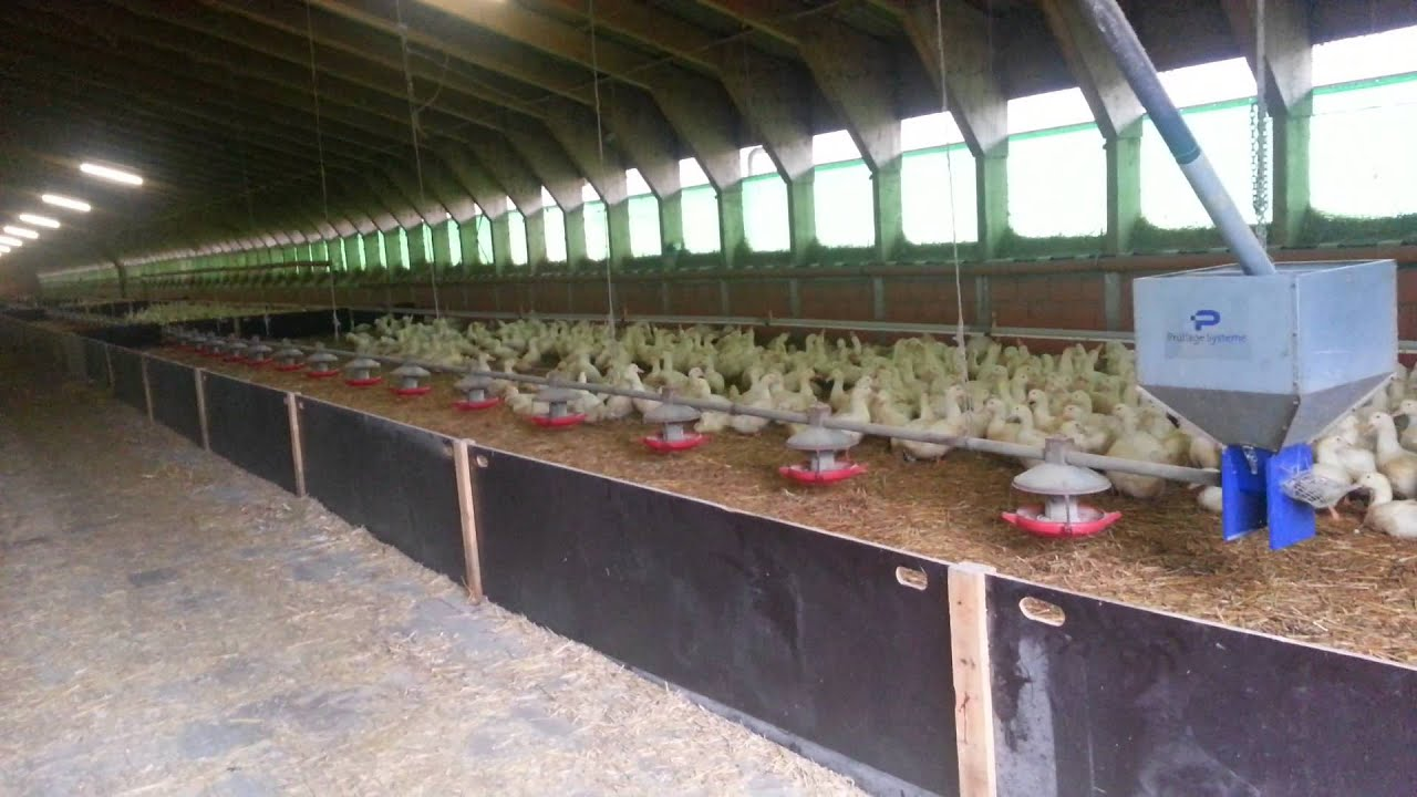 Как построить страусиную ферму своими руками