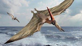 Biggest Prehistoric Birds Hatzegopteryx Duniya ka Sabse Bada Parinda
