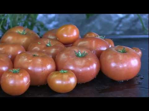 Grow Light Review - Hydro Grow's 336x LED Grow light with Beef Steak Tomatoes