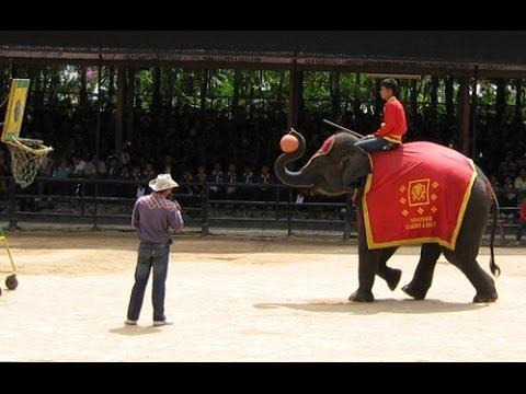 Паттайя. Нонг Нуч. Шоу слонов. Elephant show in Nong Nuch