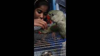 indian ringneck parrots baby talking first time