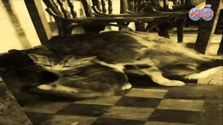 دنيا القطط ما بين حنان الام ودلع الولاد
