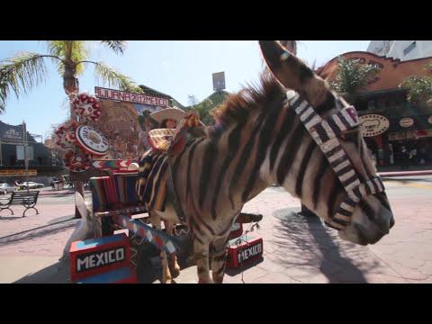Av. Revolución, ¡La calle más famosa de Tijuana!