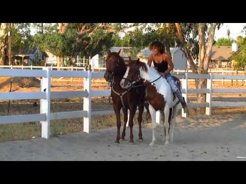 !!Horse Riding Dares!!
