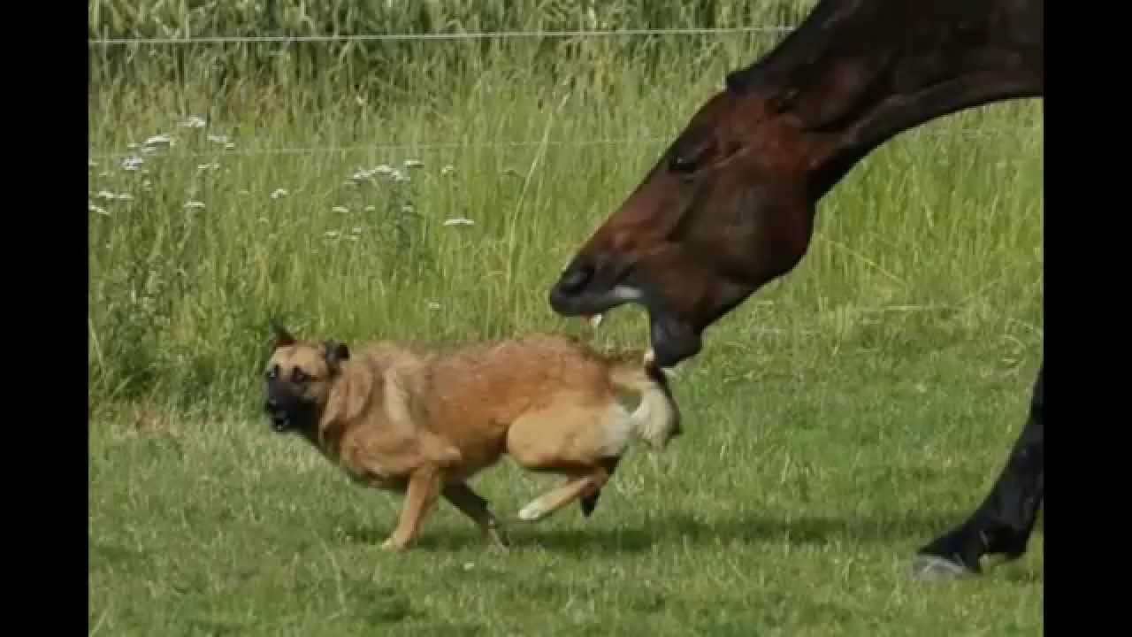 How to Stop a Horse That Tries to Buck