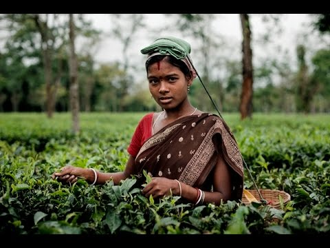 UNICEF and the Ethical Tea Partnership: Protecting children from exploitation
