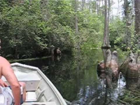 okefenokee swamp passage ap lang 11th grade