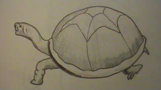 How to Draw a Tortoise Quickly