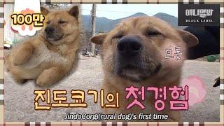 진돗개인줄 알고 5년을 살았다..ㅣ똥개지오그래피 1화 경남 밀양 똥개 복돌이편 Rural Dog Geography EP1