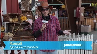 Honey Badger Visits the Los Angeles County Fair for PawNation