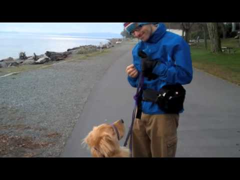 Cooper - Dog Walking Tips