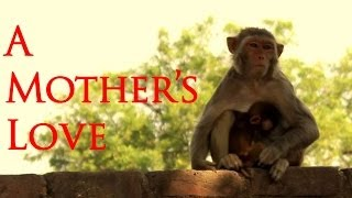 A MOTHER'S LOVE Touched My Heart- Dedicated to All Loving, Caring & Inspiring Mothers