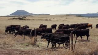 Horseshoe Ranch - Capulin Volcano National Monument