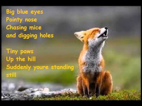 Ylvis   What The Fox Say?  Lyrics  picture