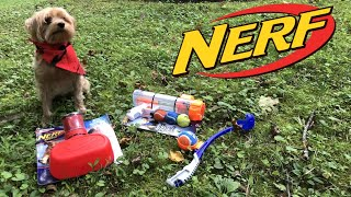 Honest Review: NERF Dog Toys (Complete with Dog!)