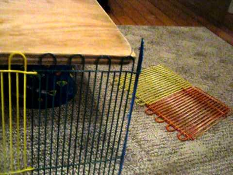 How to build a homemade guinea pig cage part 1 youtube for Homemade guinea pig