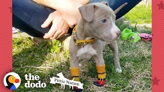 Puppy Found In Duffel Bag Is Pure Joy  | The Dodo Pittie Nation