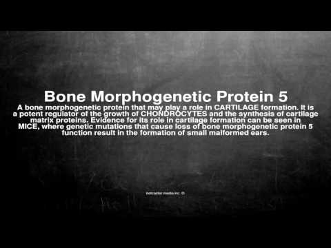 Medical vocabulary: What does Bone Morphogenetic Protein 5 mean