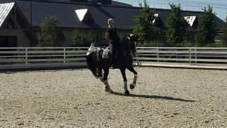 "Russian Horse Dressage ""ADMIRAL""  RV  2006"