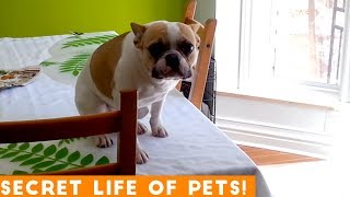 Secret Life of Pets Funniest Compilation 2019 | Funny Pet Videos