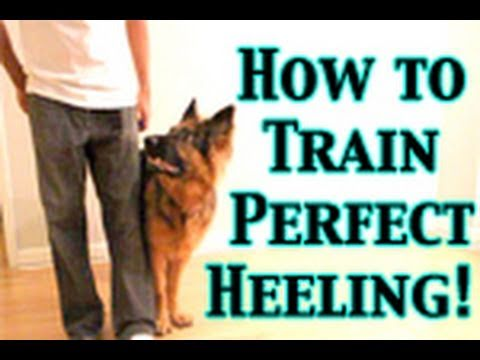 How To Train Any Dog To Heel PERFECTLY!