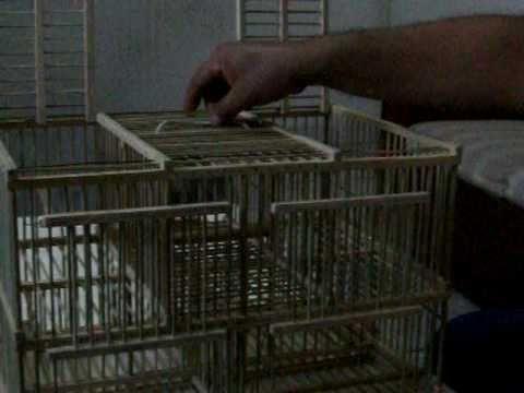 Trampa para aves 2011 y su mecanismo