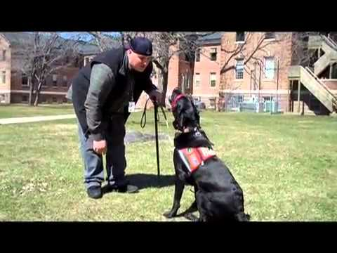 Assistance dogs help veterans