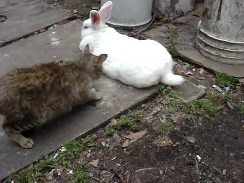El conejo pervertido