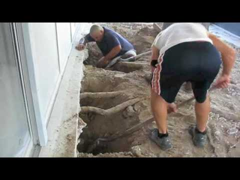 Tree Roots Going Into Our House Foundation Youtube