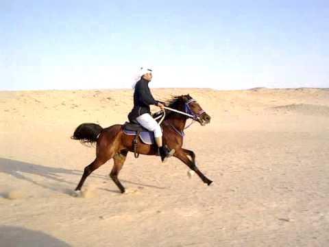 مكتب الرحلات يقدم افضل الاسعار و الخدمات لتنشيط السياحي في الهرم