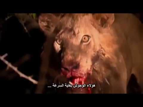 اخطر الافاعي في افريقيا مترجم عربي thumbnail