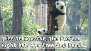 Download Lagu Tree Terminator: The Eternal Fight Between Tree And Panda   iPanda Gratis STAFABAND