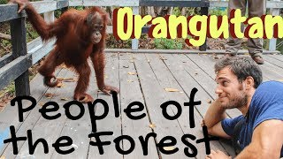 Orangutans: People of the Forest